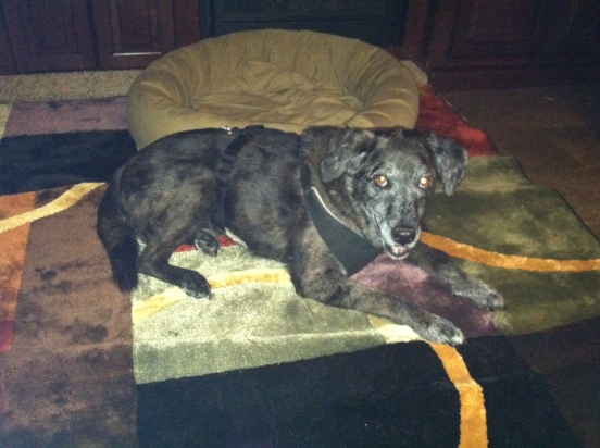 Cocoa resting comfortably on my new rug