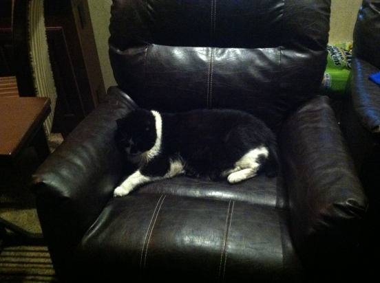 Raskal happy to be sitting in Bill's chair