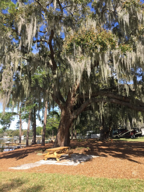 love these trees with the Spanish moss hanging all over them