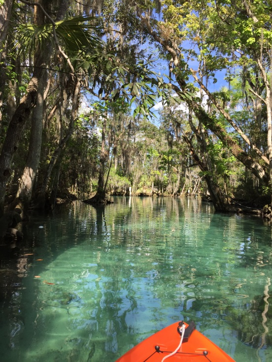 Three Sisters Springs - the water is crystal clear