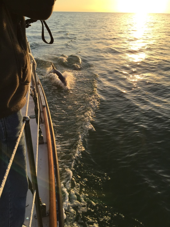 and more dolphin!