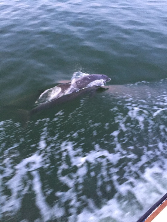 I could show a lot more pics of dolphin - but I think you get the idea!