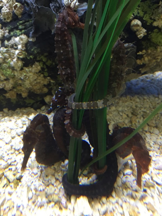 seahorses are the coolest!