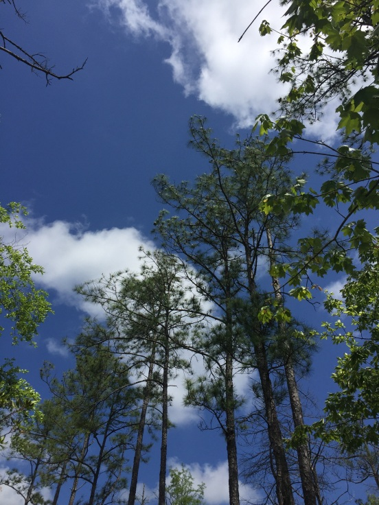 I love the contrast of the green of the trees and the blue/white of the sky