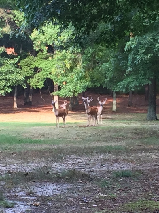 the bigger one is an 8-point buck!