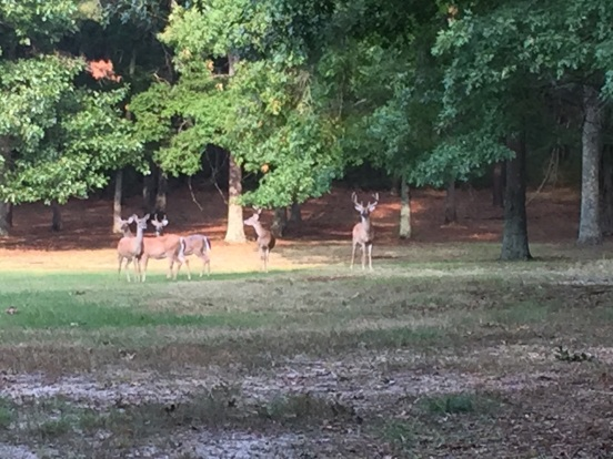 back at John's - the deer were hungry