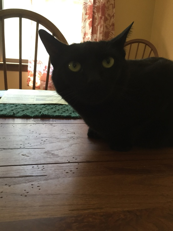 This is Bella - their cat. Could be my son's cat's twin